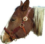 Little Creek Halter